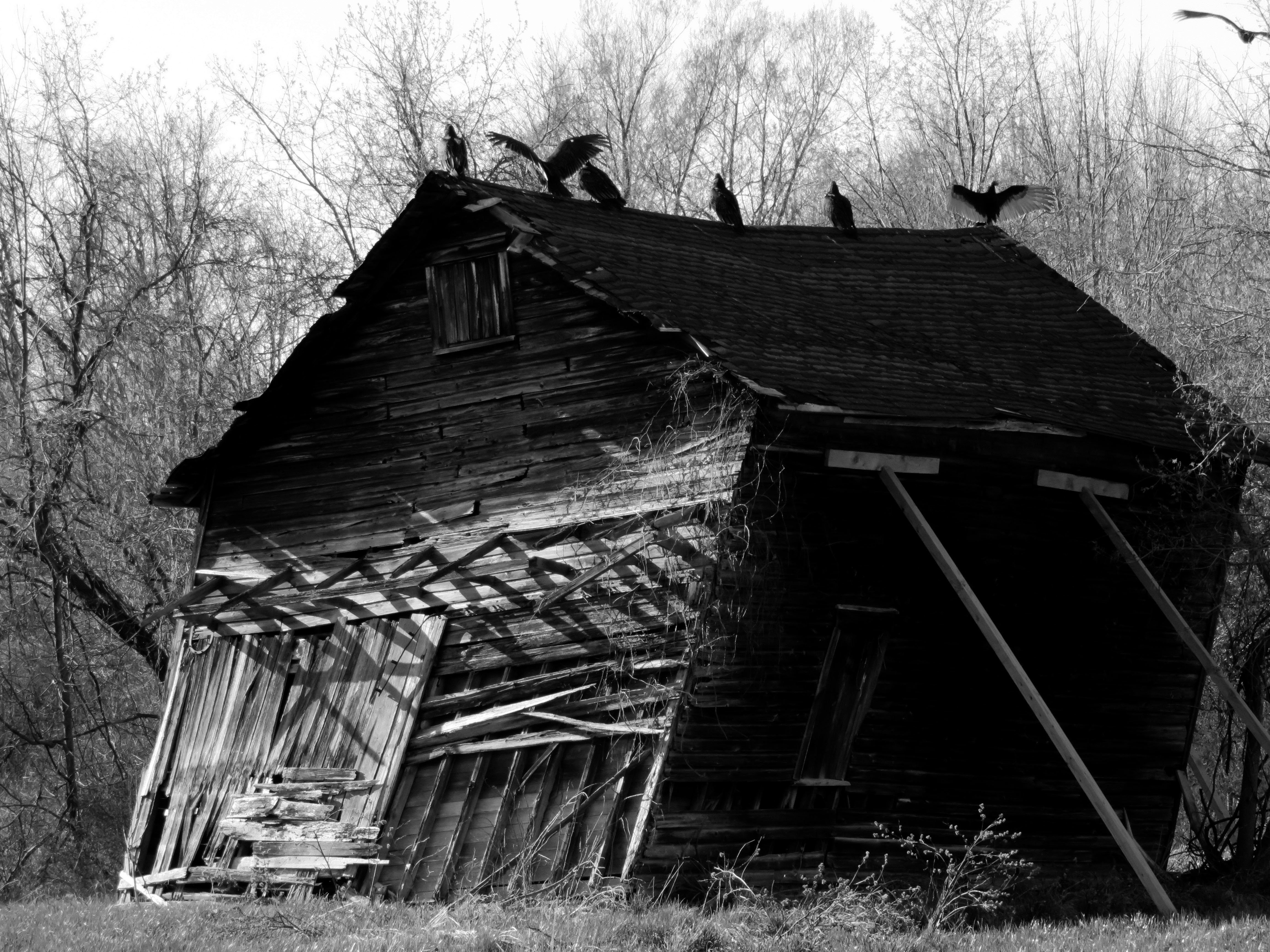 Some of the photos we managed with the SX700 HS are quite nice, such as this shot of vultures perched on a dilapidated shack.