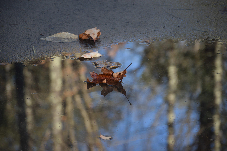 A sample photo taken by the Nikon D5300.