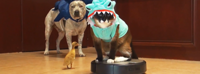 https://reviewed-production.s3.amazonaws.com/attachment/9ac796a365d64778/animals-on-roombas-hero.png