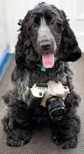 DogAndCamera-donebythehandsofabrokenartist.jpg