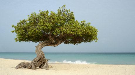 Southern-Caribbean-460.jpg