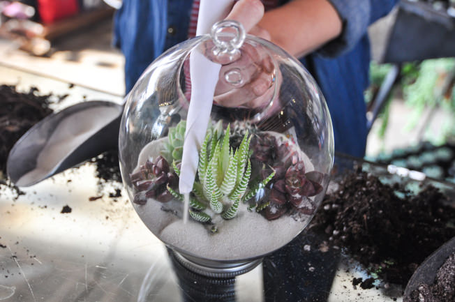 Succulent-Terrarium-8.jpg
