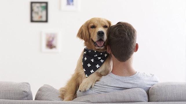 Territory Trendy Dog Bandana