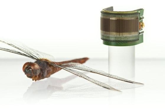 Dragonfly comparison