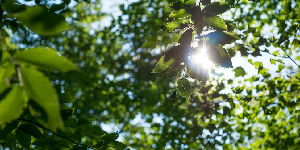 Sample crop leaf