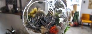 Succulent terrarium hero